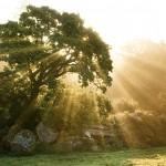 Презентация PowerPoint: Красота деревьев