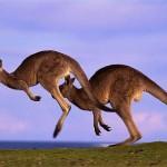 презентация PowerPoint: Особенности компонентов природы Австралии