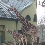 Немцы расселят животных по странам и континентам