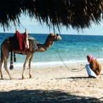 Отдых и туры в Египет.
