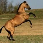 Лошадь – идеальна для отдыха!