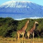 Животный мир Килиманджаро