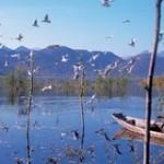 Еще про Скадарское озеро