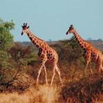 Экскурсии по Африке