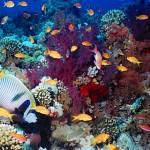 Красное море — коралловое море